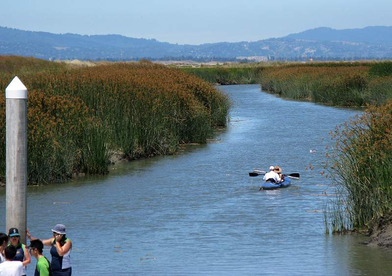 Kayak in the Alviso Slough