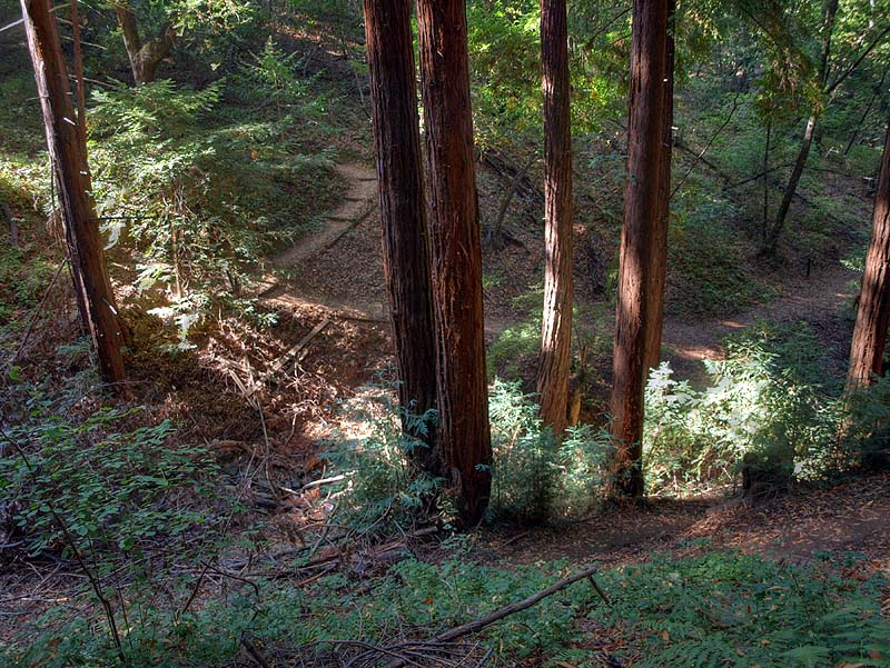 View of the Creek Trail from the Redwood Trail, Villa Montalvo
